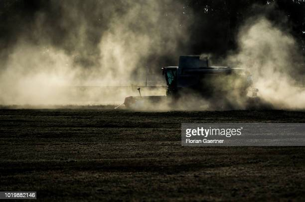 A harvester working on a dry field is pictured on August 16 2018 in Bautzen Germany
