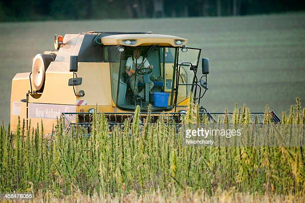 harvester working on a hemp field - hemp stock pictures, royalty-free photos & images