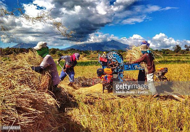harvesters in field - threshing stock photos and pictures