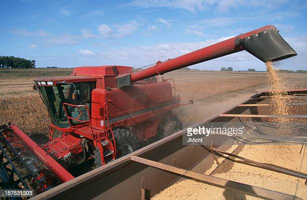 harvesting a field of soybeans with a combine harvester. - soybean harvest stock pictures, royalty-free photos & images
