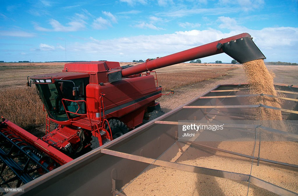 Harvesting a Field of Soybeans With a Combine Harvester. : Stock Photo