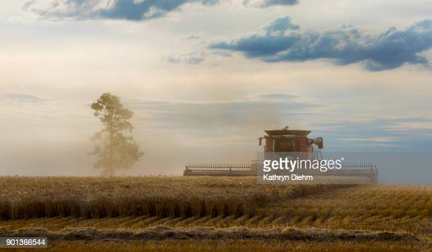 Harvesting a wheat crop in country NSW australia
