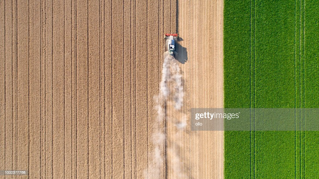 Harvesting a wheat field, dust clouds : Stock Photo