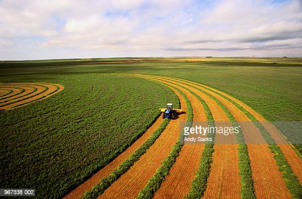 harvesting alfalfa crop, aerial view - agriculture stock pictures, royalty-free photos & images