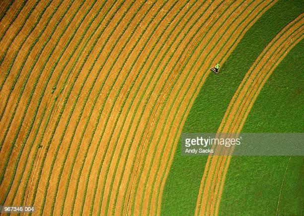 Harvesting alfalfa crop, lines of crop, aerial view