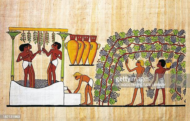 Harvesting and crushing grapes papyrus reconstruction of a fresco from the Theban tomb of Nakht original dating back to the Dynasty XVIII Egyptian...