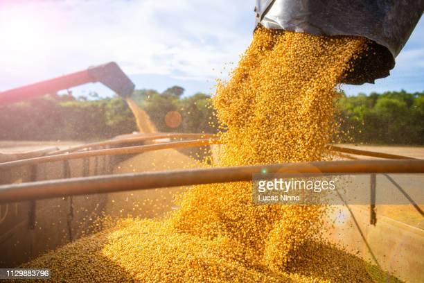 harvesting and storing soybean - crop plant - fotografias e filmes do acervo