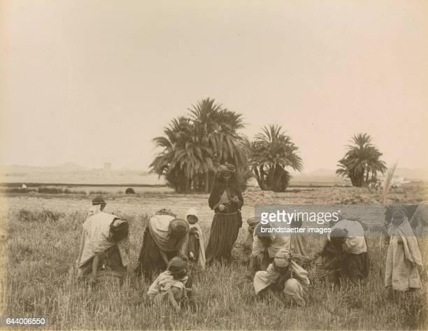 Harvesting being undertaken by women and children Algiers Algeria Journey to Tanger Oran Algér 1890 Albumen print Photograph Photo album from the...