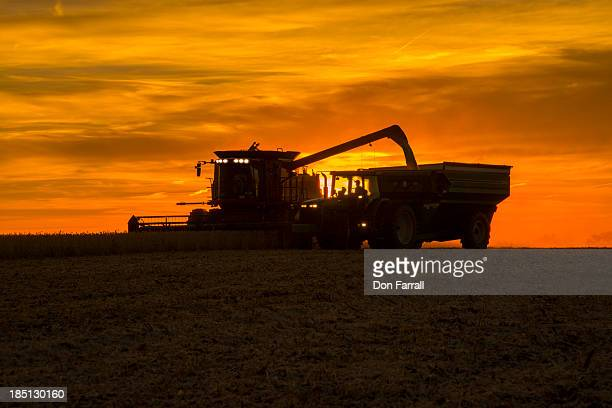 harvesting crops - soybean harvest stock pictures, royalty-free photos & images