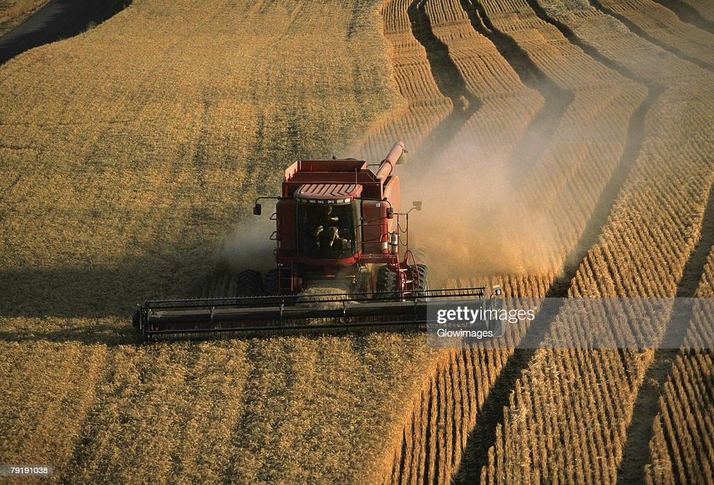 Harvesting golden wheat, Washington state : Stock Photo