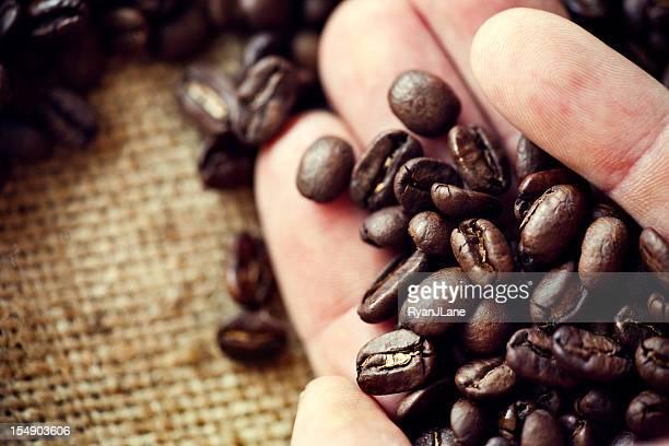 Harvesting Hand Holding Coffee Over Burlap