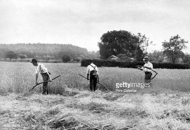 Harvesting hay 1926 From An Outline of Christianity The Story of Our Civilisation volume 5 Christianity Today and Tomorrow edited by RG Parsons and...