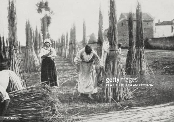 Harvesting hemp Italy photograph by Abeniacar from L'Illustrazione Italiana Year XLI No 29 July 19 1914