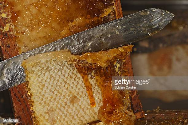harvesting honey - hauts de france stock photos and pictures