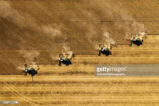 oogsten in landbouw akkerbouw. - gewas stockfoto's en -beelden