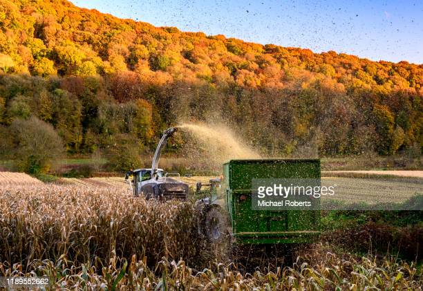 harvesting maize beside the river wye in the wye valley, wales - farm stock pictures, royalty-free photos & images