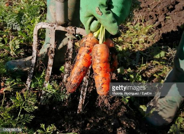 harvesting - organic stock pictures, royalty-free photos & images