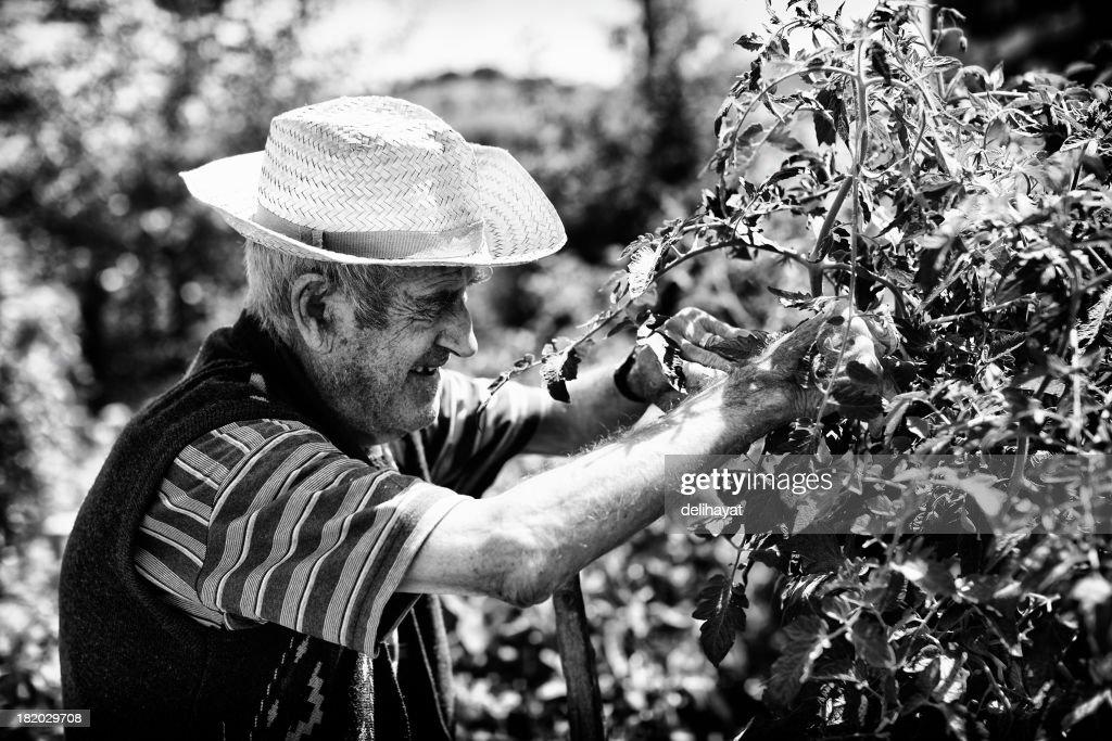 Harvesting : Stock Photo