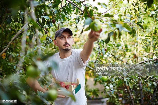 harvesting - farm worker stock pictures, royalty-free photos & images