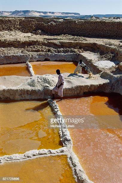 Harvesting Salt from Ponds