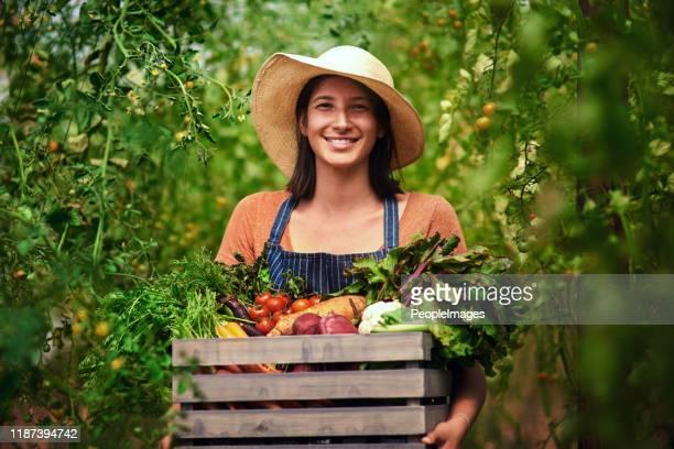 a estação de colheita está no balanço cheio - cena rural - fotografias e filmes do acervo