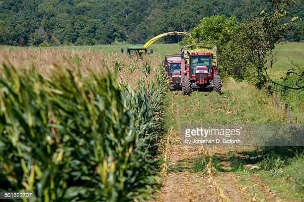 harvesting silage - eubank stock photos and pictures