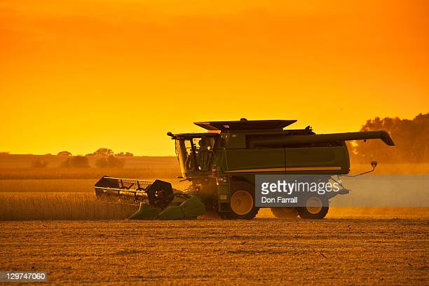 harvesting soybeans at sunset. - soybean harvest stock pictures, royalty-free photos & images