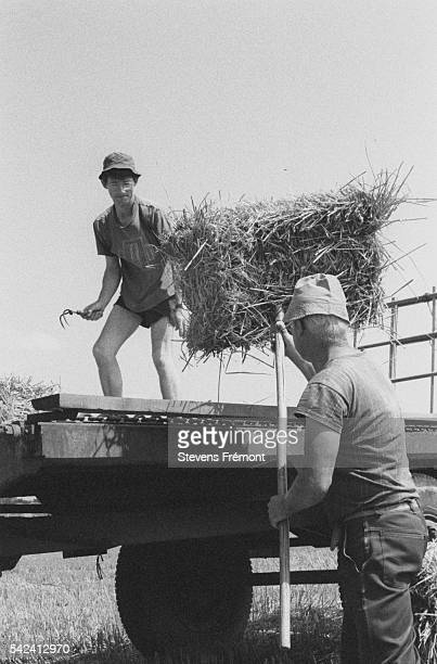 in the summer holidays the farmers' children lend a helping hand