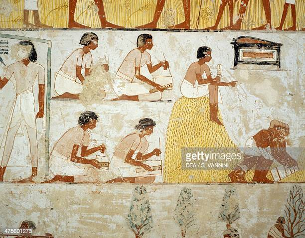 Harvesting the crop threshing and winnowing of the grain detail from the frescoes in the vestibule of the Tomb of Menna Sheikh Abd el Qurnah...