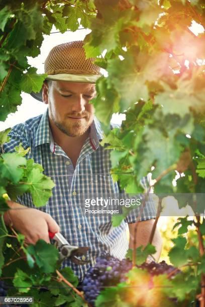 Oogst de vruchten van zijn arbeid