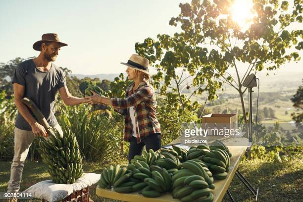 harvesting throughout the year - fruit farm stock photos and pictures