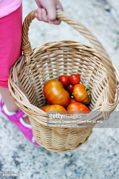 harvesting tomatoes - gregoria gregoriou crowe fine art and creative photography stock pictures, royalty-free photos & images