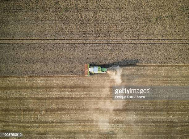 Harvesting Wheat, France 2