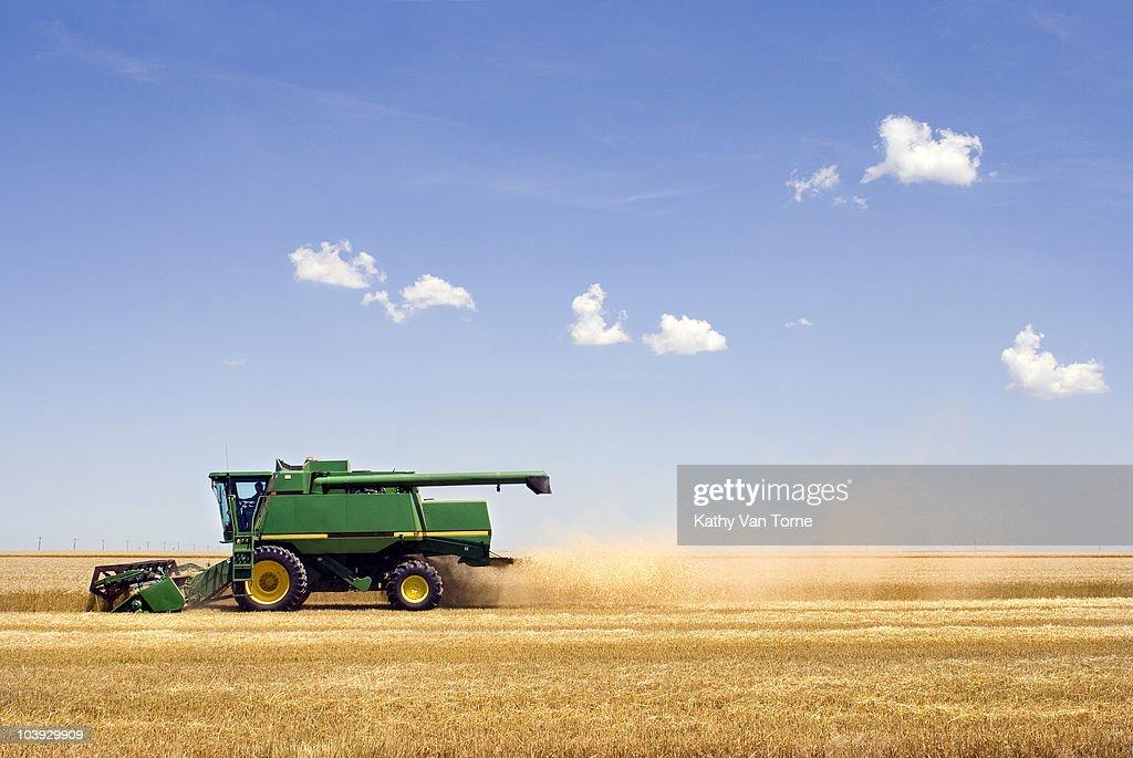 Harvesting Wheat : Stock Photo