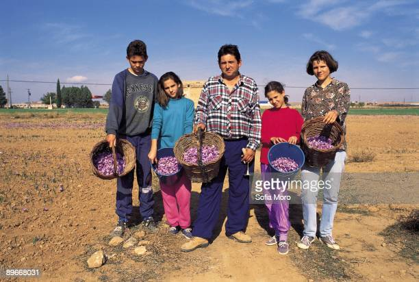 ´Harvests of the saffron´ Collection of the saffron Consuegra Toledo ´Harvests of the saffron´ A farmer and their children show the flowers of the...