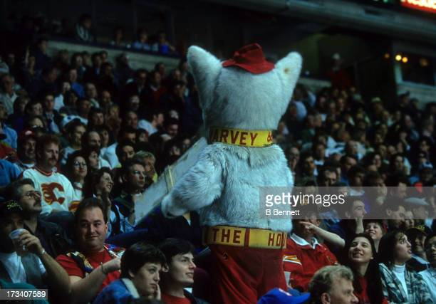 Harvey The Hound, mascot for the Calgary Flames, tries to get the crowd involved in the game during an NHL game in April, 1994 at the Olympic...