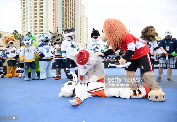 Harvey the Hound of the Calgary Flames and Spartacat of the Ottawa Senators attend to Wild Wing of the Anaheim Ducks during the PreGame Mascot...