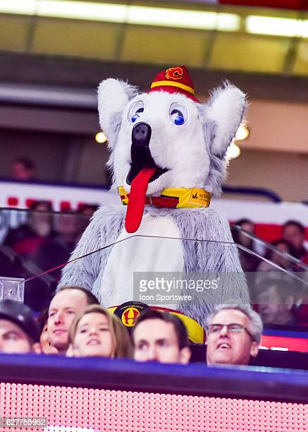 Harvey the Hound watches the game during a game between the Calgary Flames and the Anaheim Ducks on December 04 at the Scotiabank Saddledome in...
