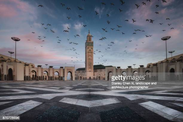 hassan ii mosque flock - casablanca stock pictures, royalty-free photos & images
