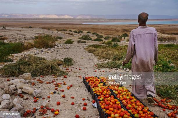 Hassan Kanazri, a 63-year-old tomato farmer, looks off towards the area where the Dead Sea has receded and sinkholes have appeared, in Ghor Haditha,...