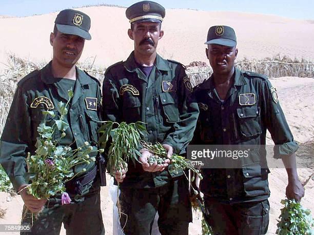 Hassen ZENATI Algerian National Security policemen display seized poppy bulbs from a poppy field near Annaba south of Algiers 24 July 2007 Algeria...