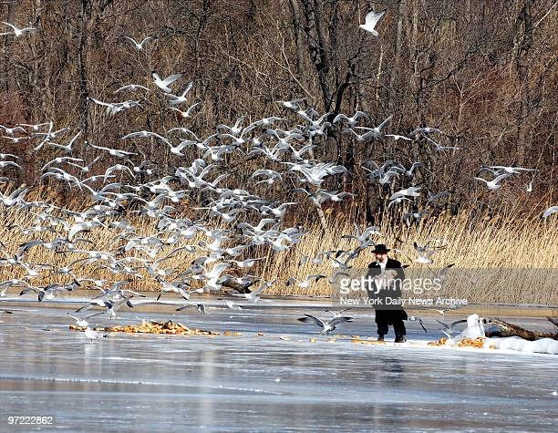 Hassidic man ventured out into frigid Prospect Park Lake to toss loaves to break to the seagulls and ducks Wednesday afternoon