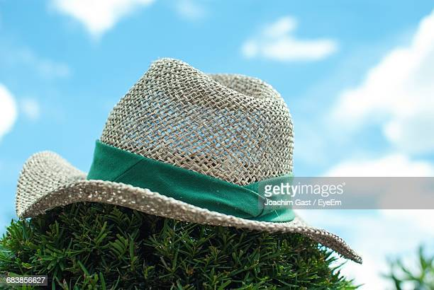 Hat On Plant Against Sky