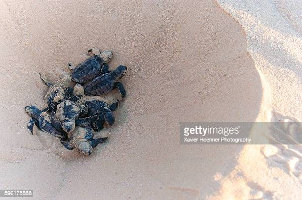 hatching - animal nest stock pictures, royalty-free photos & images