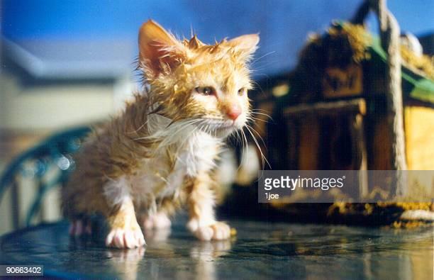I Hate Flea Baths!