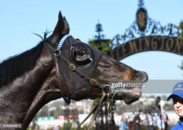 Haunted after winning Race 5 Star Of The Realm Handicap during Melbourne Racing at Flemington Racecourse on September 26 2018 in Melbourne Australia