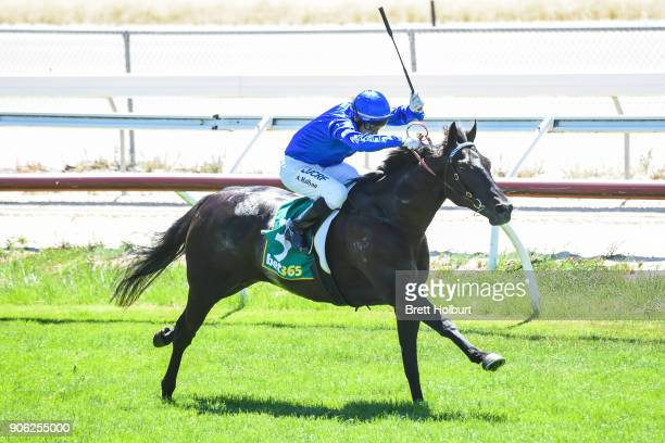 Haunted ridden by Andrew Mallyon wins the Vale William 'Bill' Harding Maiden Plate at Kilmore Racecourse on January 18 2018 in Kilmore Australia