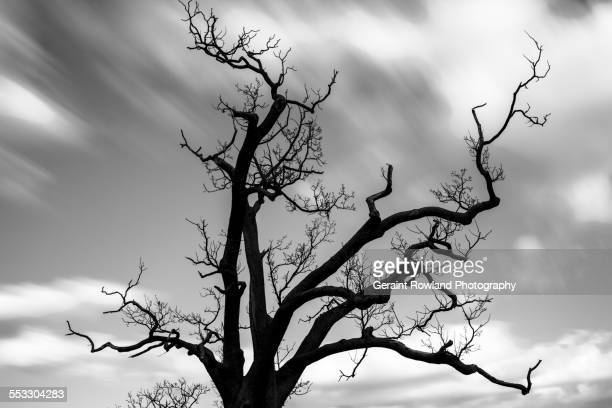A Haunting bare Tree against a cloudy sky