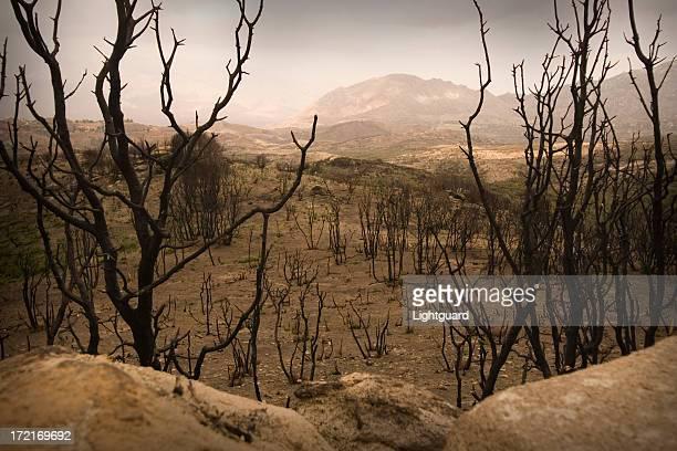 Atormentando restos de un cepillo de incendios en el sur de California