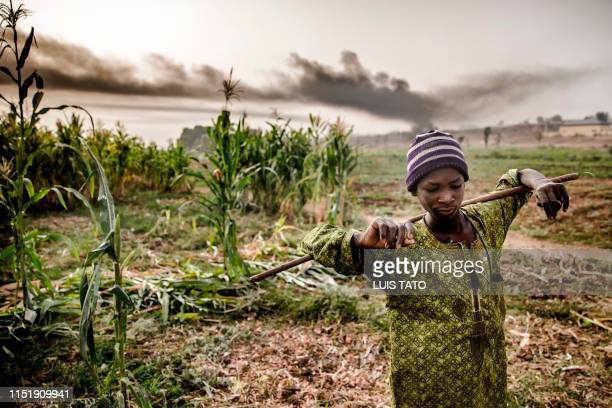 A HausaFulani boy stands while his cattle is grazing near some farms in the outskirts of Sokoto Sokoto State Nigeria on April 22 2019 Massive...